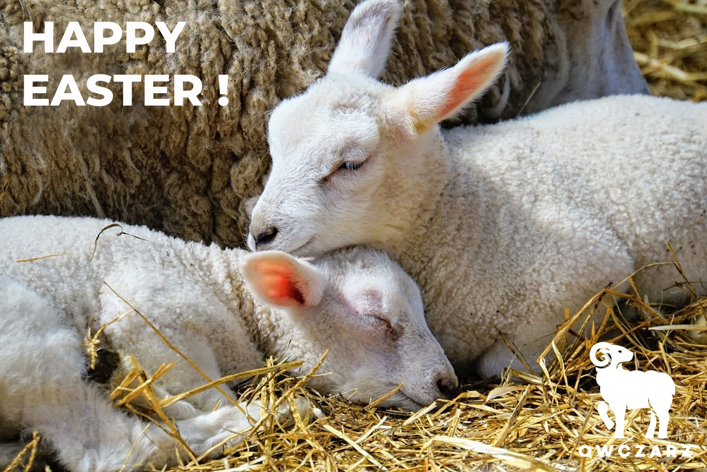 Happy Easter from Owczarz - wool products